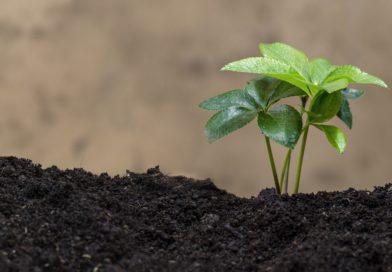 Développement personnel et écologie